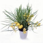 Flori artificiale 1995