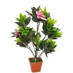 Magnolia BJ204/PK032