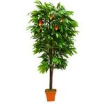 Mango LDT11-657
